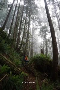West Coast Trail trees